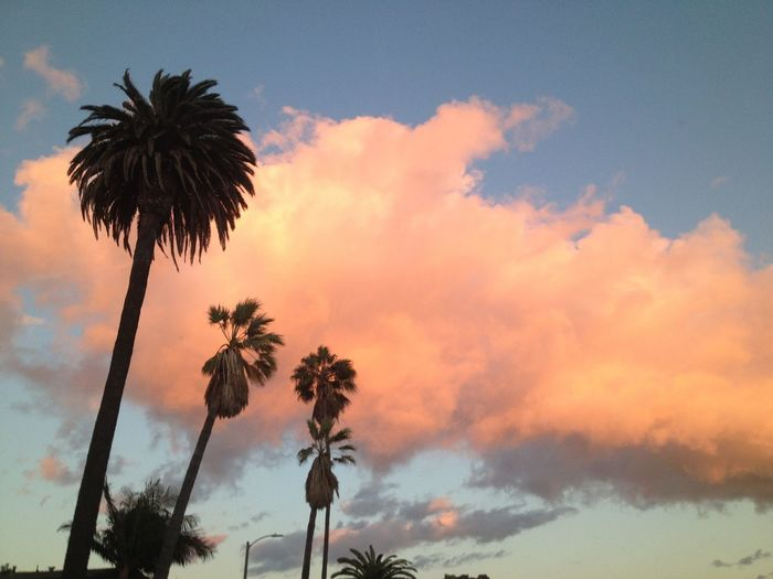 Palm trees and pink clouds California. Sky Palm Tree Tree Sky Sunset Cloud - Sky Nature Growth Low Angle View No People Beauty In Nature Scenics Outdoors Day Pink Neighborhood Map