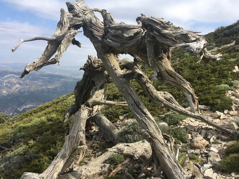 Day Mountain Nature No People Outdoors Scenics Tree Trunk