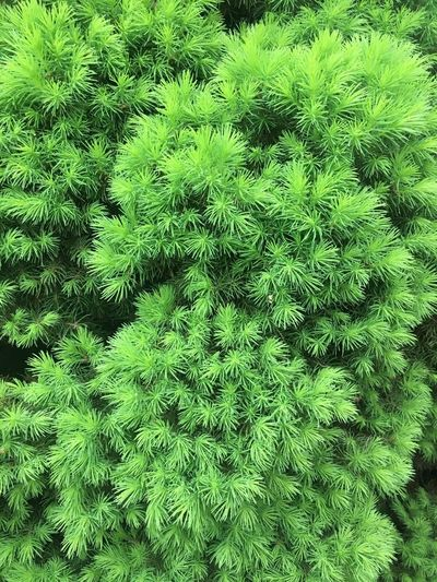 Green Color Backgrounds Full Frame Tree Nature Day Growth No People Outdoors Plant Beauty In Nature Close-up Sky