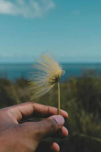 Going where the wind blows. EyeEm Nature Lover Landscape Beautiful Flower Human Hand Human Body Part One Person Personal Perspective Holding Water People Nature Day Outdoors Freshness