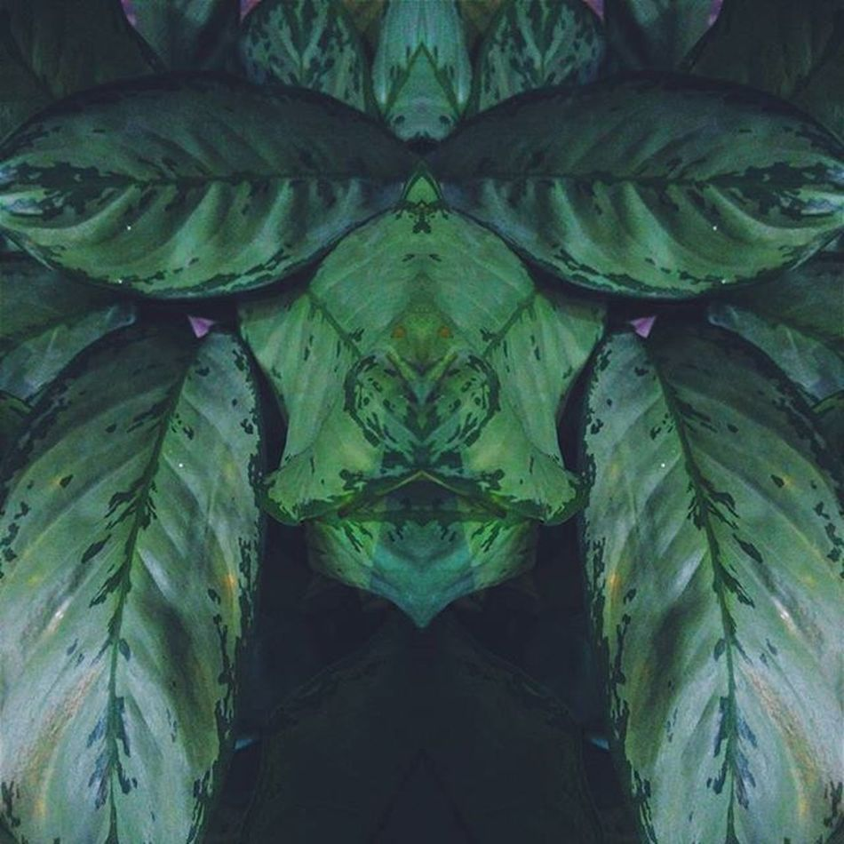 Leaves VSCO Vscocam Green Igers Igersindia Mirrorart Nature