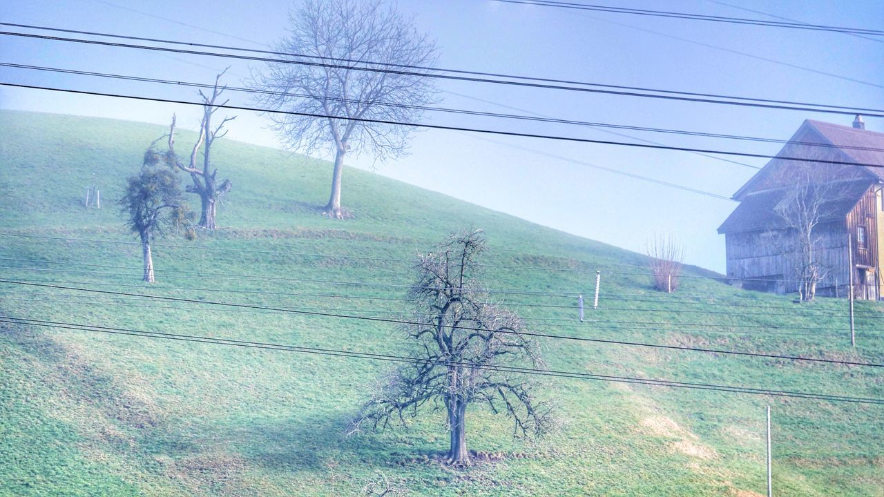 Tree Power Line  Field Outdoors Power Supply Cable Electricity  Landscape Tranquility Nature Electricity Pylon No People Sky Tranquil Scene Bare Tree Grass Day Beauty In Nature Architecture Swissalps Swiss Landscape Switzerlandpictures Switzerland Wintertime Foggy