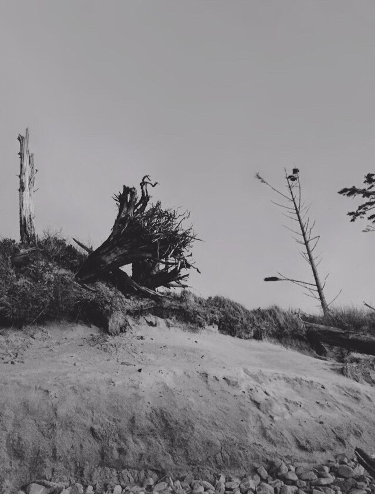Showing Imperfection Nature Landscape #Nature #photography Scenics Landscape Photography Scenic View Nature Photography Scenic Landscapes Landscape Views Trees Abstract Nature Neat Places Trees And Sky Black And White Beach Oregon Coast