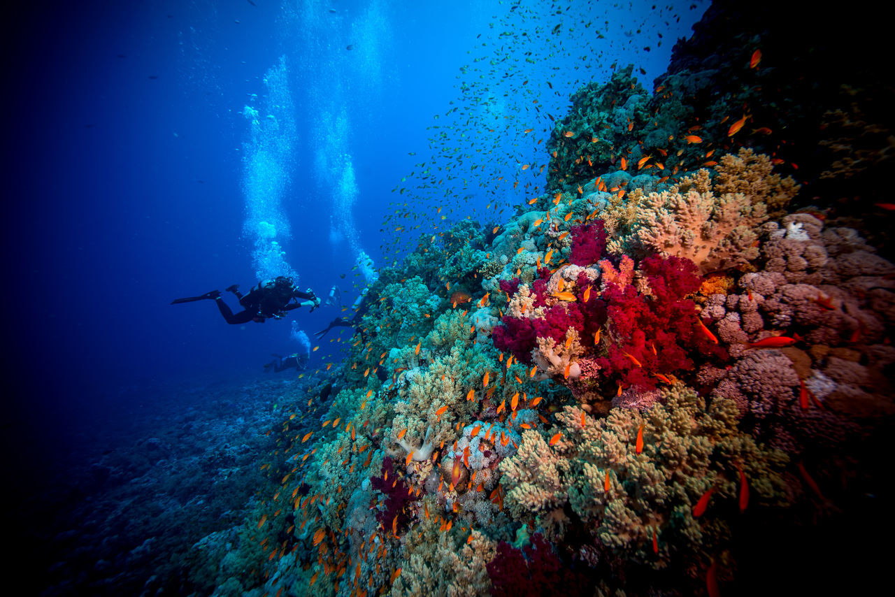 red sea Adventure Aquatic Sport Beatiful Nature Coral Escape Exploration Explorer Extreme Adventures Light And Shadow Nature Ocean One Person RedSea Reef Scuba Diving Scubadiving Sea Sea Life Solo Traveller Swimming Travel Photography UnderSea Underwater Unusual Beauty Water