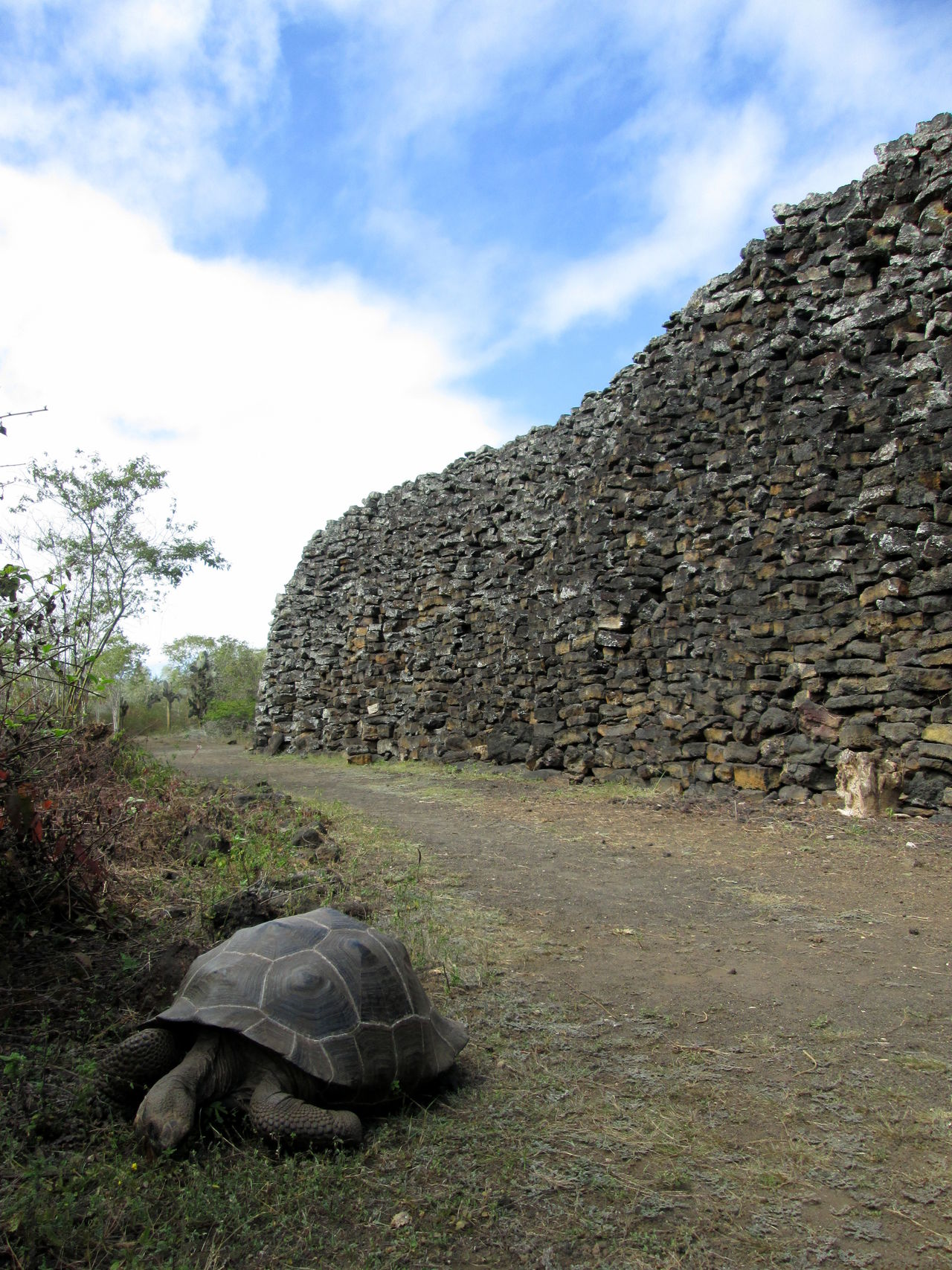Animals In The Wild Ecuador Galapagos Galapagos Islands Giant Tortoise Isabela Island No People Rock Rock - Object Rock Wall Stone - Object Tortoise Travel Destinations Wall Of Tears Wildlife