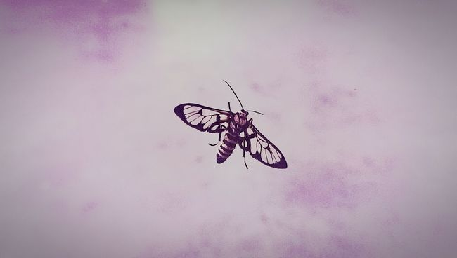Bugs Transparent Wings Looking At You ~