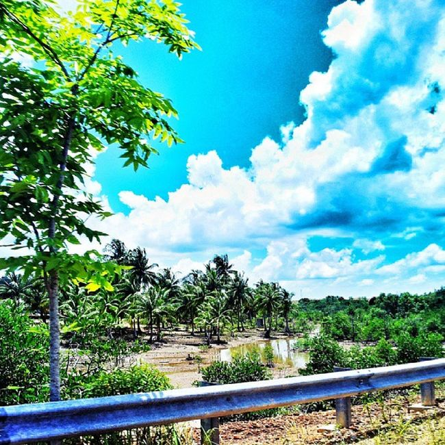 On my way home.. Today Senggarang Tanjungpinang INDONESIA sun sky cloud tree coconut mangrove blue green nature view photography takenbyme instagram