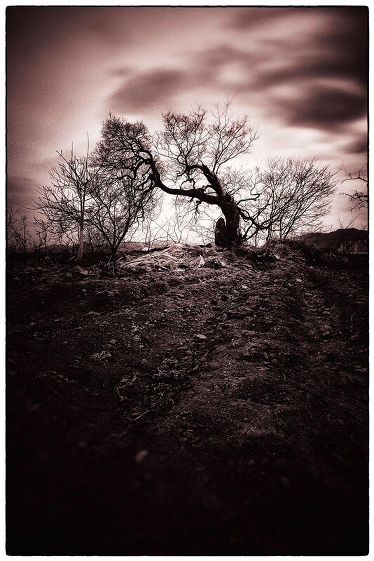 Lone Tree Dusk Sky Long Exposure Cloud - Sky Stillness