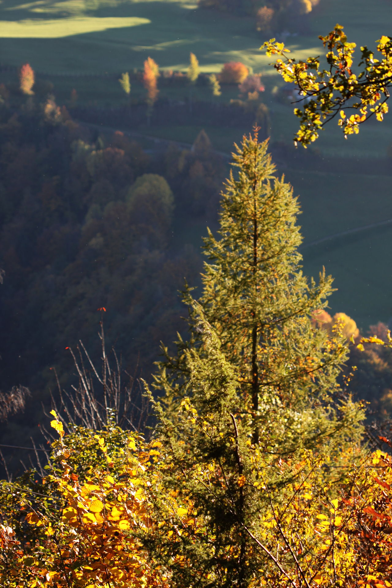 Autumn Autumn 2016 Beauty In Nature Fiè Allo Sciliar Forest Illuminated Italy Nature No People Outdoors Sunset Südtirol Trees And Bushes