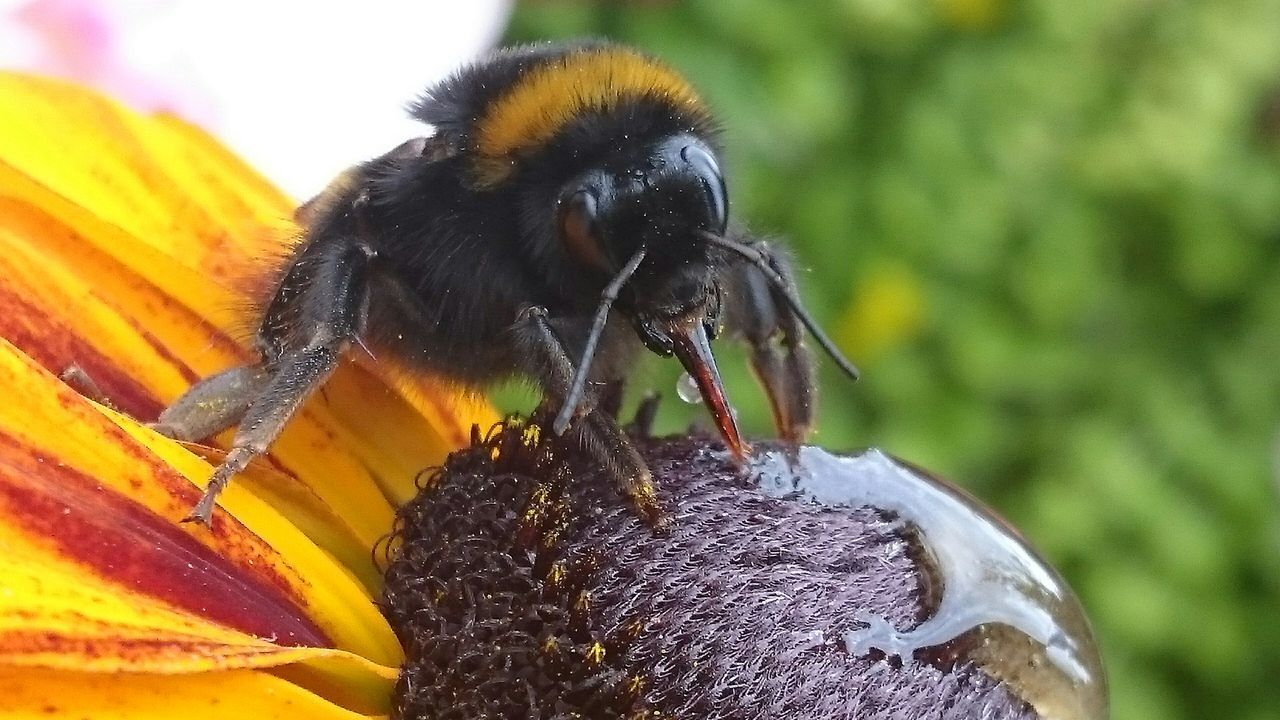 Beautiful stock photos of bee, Animal Themes, Animals In The Wild, Beauty In Nature, Black Color