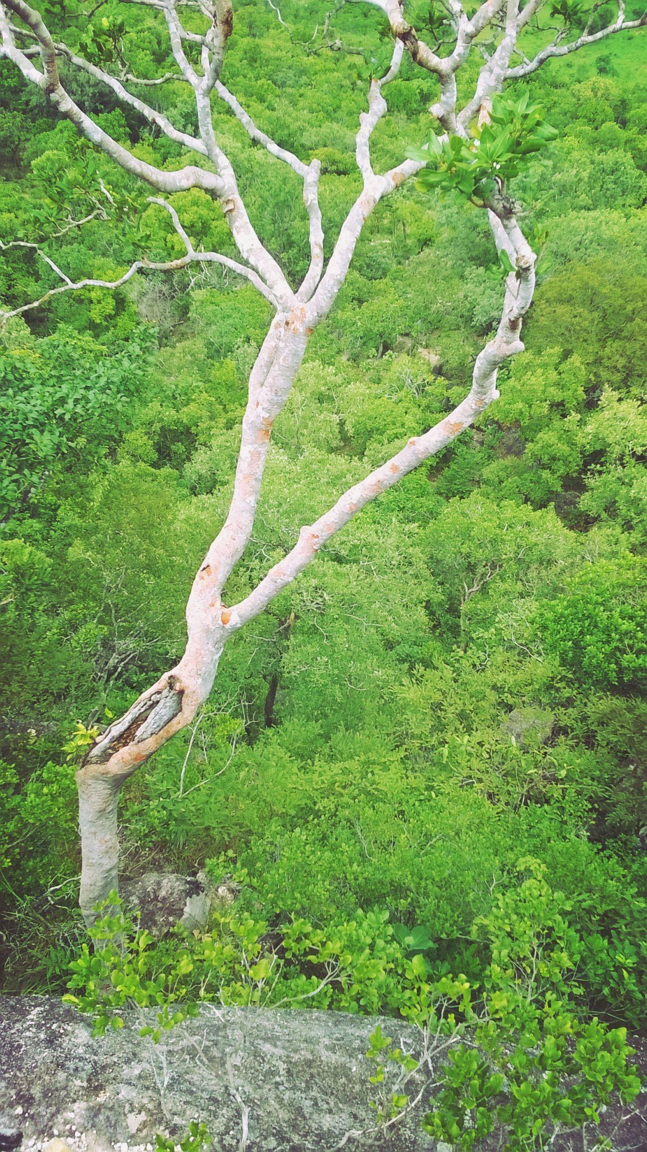 LoveNature Serradocarmo Brasil Nature_collection Naturenaturelovers Nature Photography