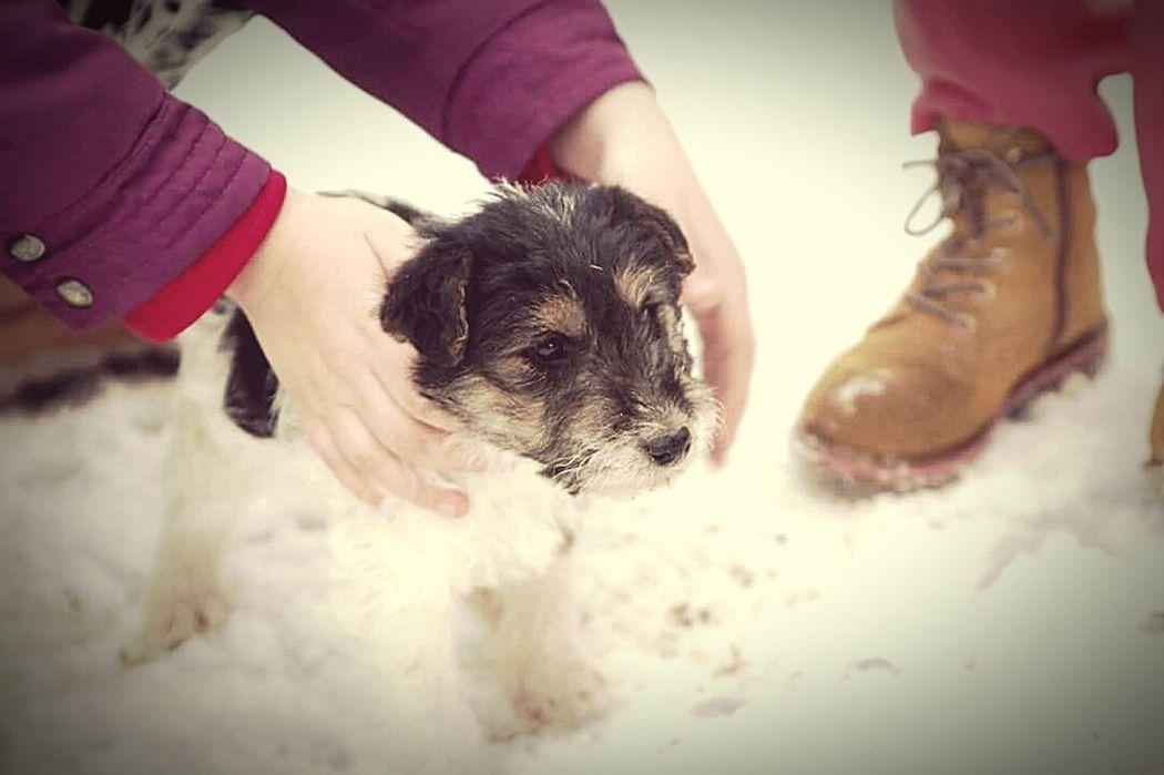 Puppy Dog PuppyLove Beauty Littledog Photo Pets Little Pets Babydog Cute Cute Baby Dog Animal Head