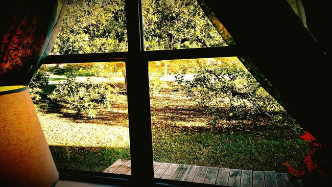 """""""Love the trees until their leaves fall off, then encourage them to try again next year."""" Chad Sugg Autumn From My Point Of View Eye4photography  Malephotographerofthemonth Tadaa Community Out My Front Door Looking Out Of The Window Frontporch Taking Photos Check This Out"""