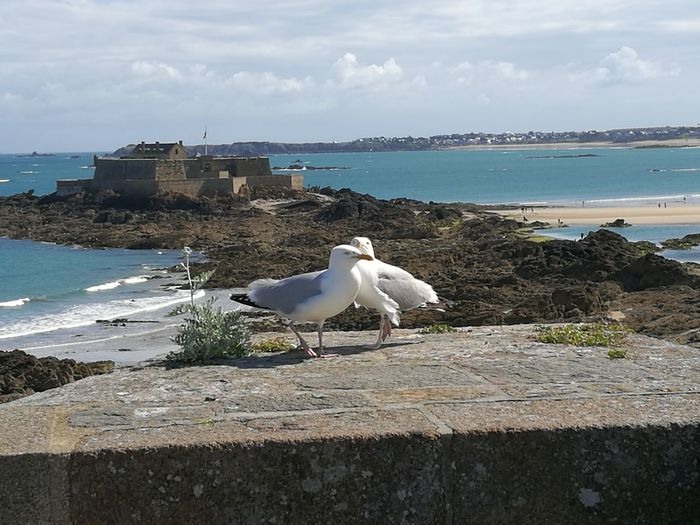 View From The Battlements Saint-Malo France Two Gulls On The Battlements View Of The Sea Manche View Of The Fort National Saint-Malo Historical Monuments Lanscape Photography Outdoor Photography Holidays