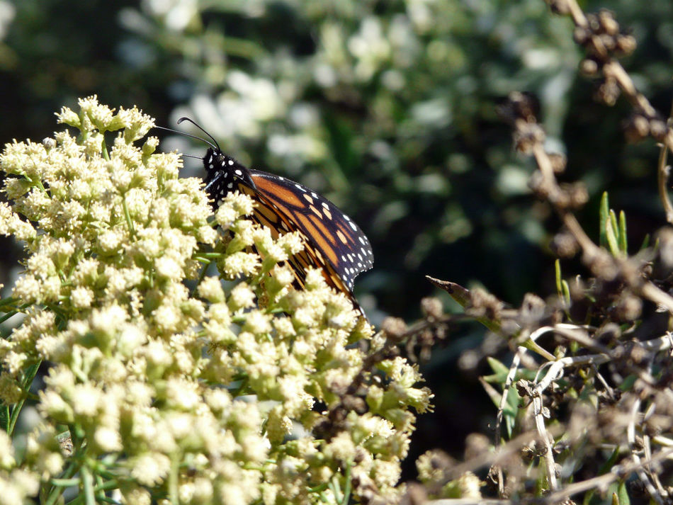 First upload! First Eyeem Photo Nature_perfection Picasa Point And Shoot 2012 Panasonic Lumix