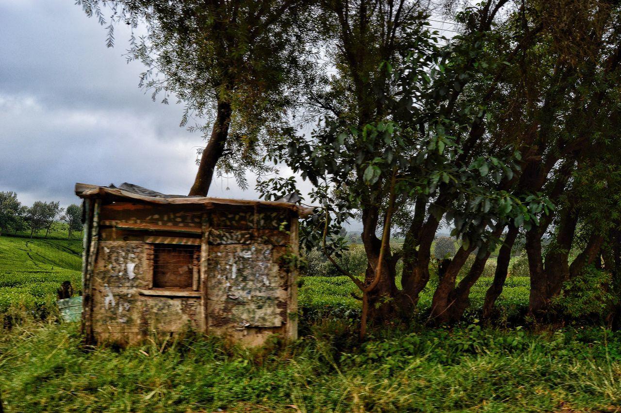 Tea Teafarm Beauty In Nature Outdoors Nature Old Structures Kenya Limuru