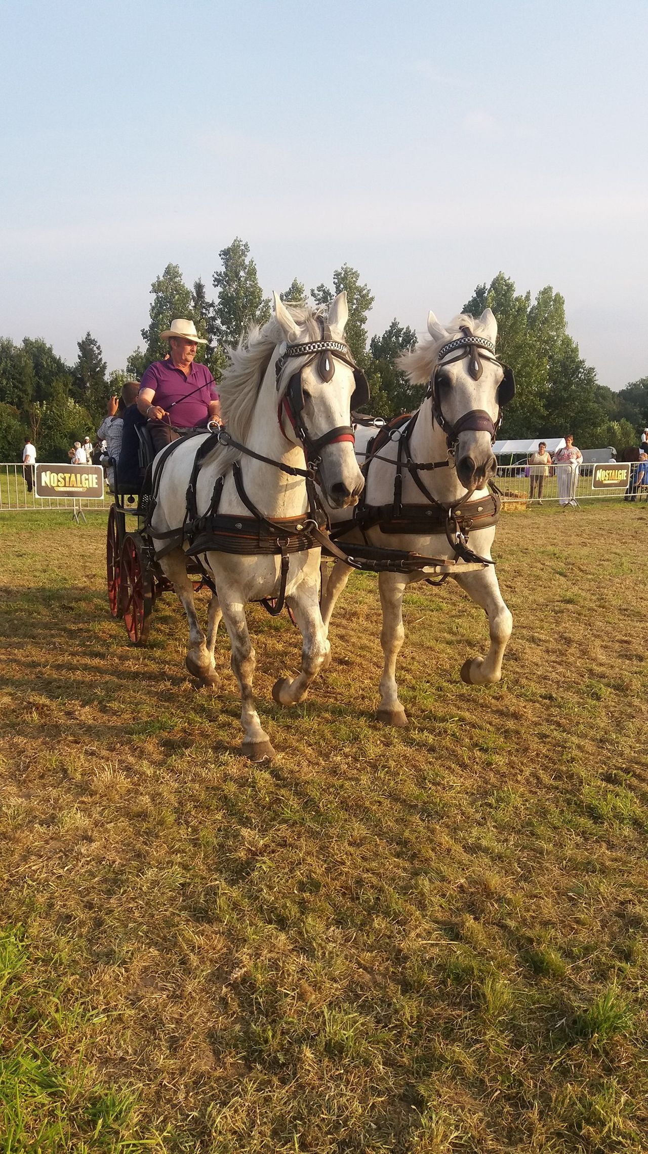 Chevaux Animal Themes Horse Attelage Chevaux