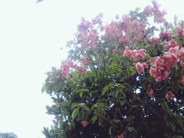 I'm a starter ;) Nature Flower Clouds