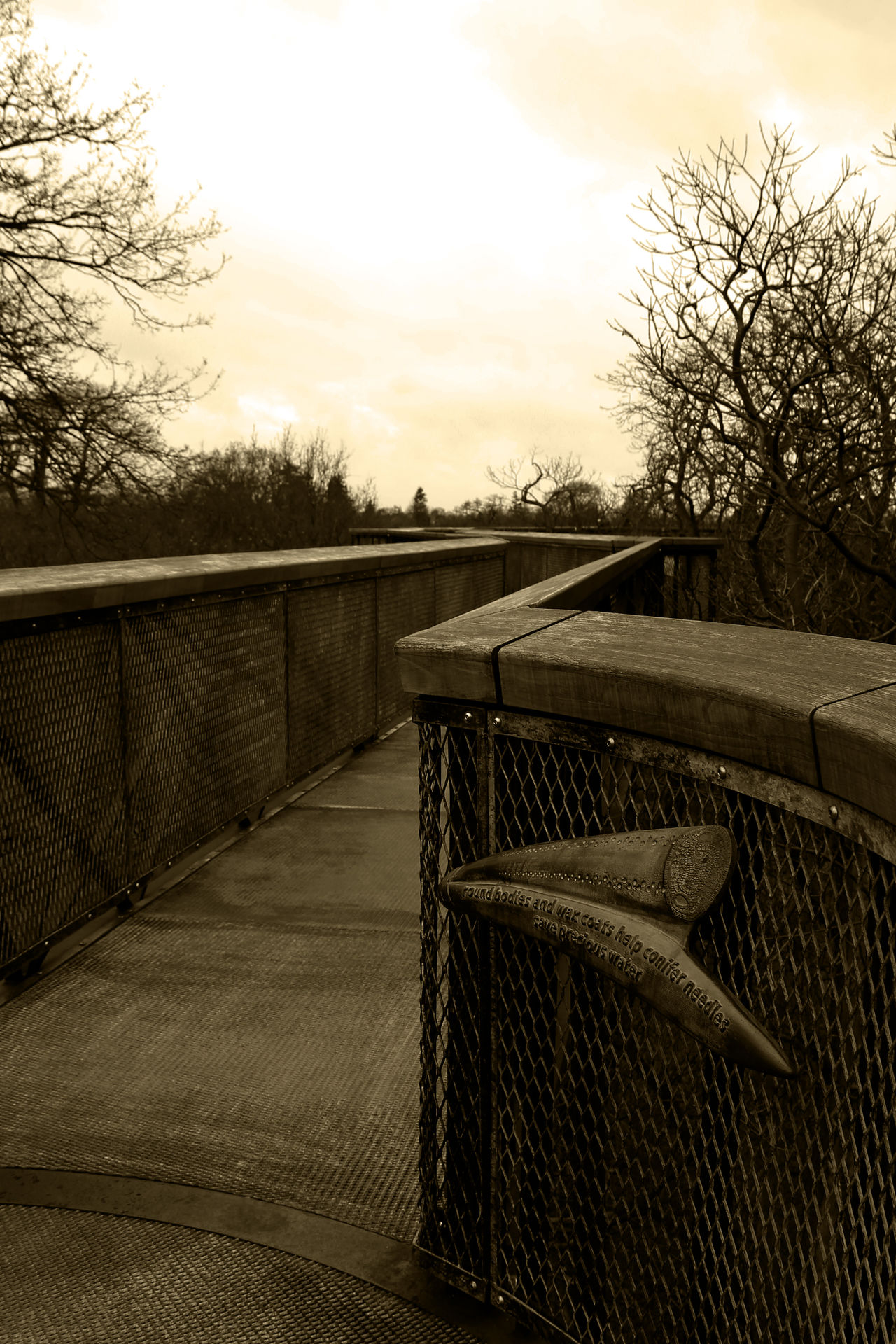 Bridge Kew Kew Bridge Kew Gardens Kew Gardens, London Kewgardens Steps And Staircase The Way Forward Sepia Photography In The Trees High Above Wooden Bridge Ahead