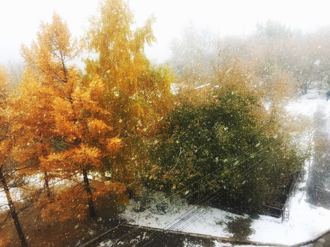 Good morning friends 👋🏼 Paint October Autumn Snow ❄ Krasnoyarsk Enisey