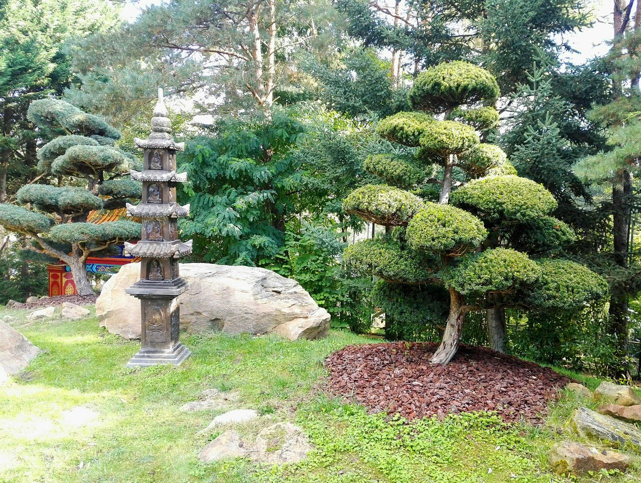Tree Tranquility Growth Tranquil Scene Plant Park - Man Made Space Nature In A Row Garden Scenics Beauty In Nature Day Footpath Outdoors Formal Garden Solitude Park Green Color Flower Tree Non-urban Scene Asian Culture Asianstyle