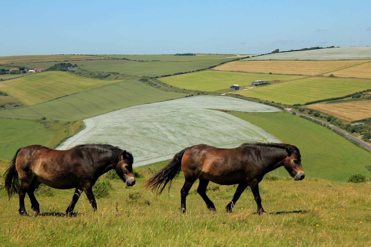 Agriculture Animal Animal Theme Day Dorset Farm Field Grass Green Color Horses Livestock No People Outdoors Pasture Rural Scene Two Horses