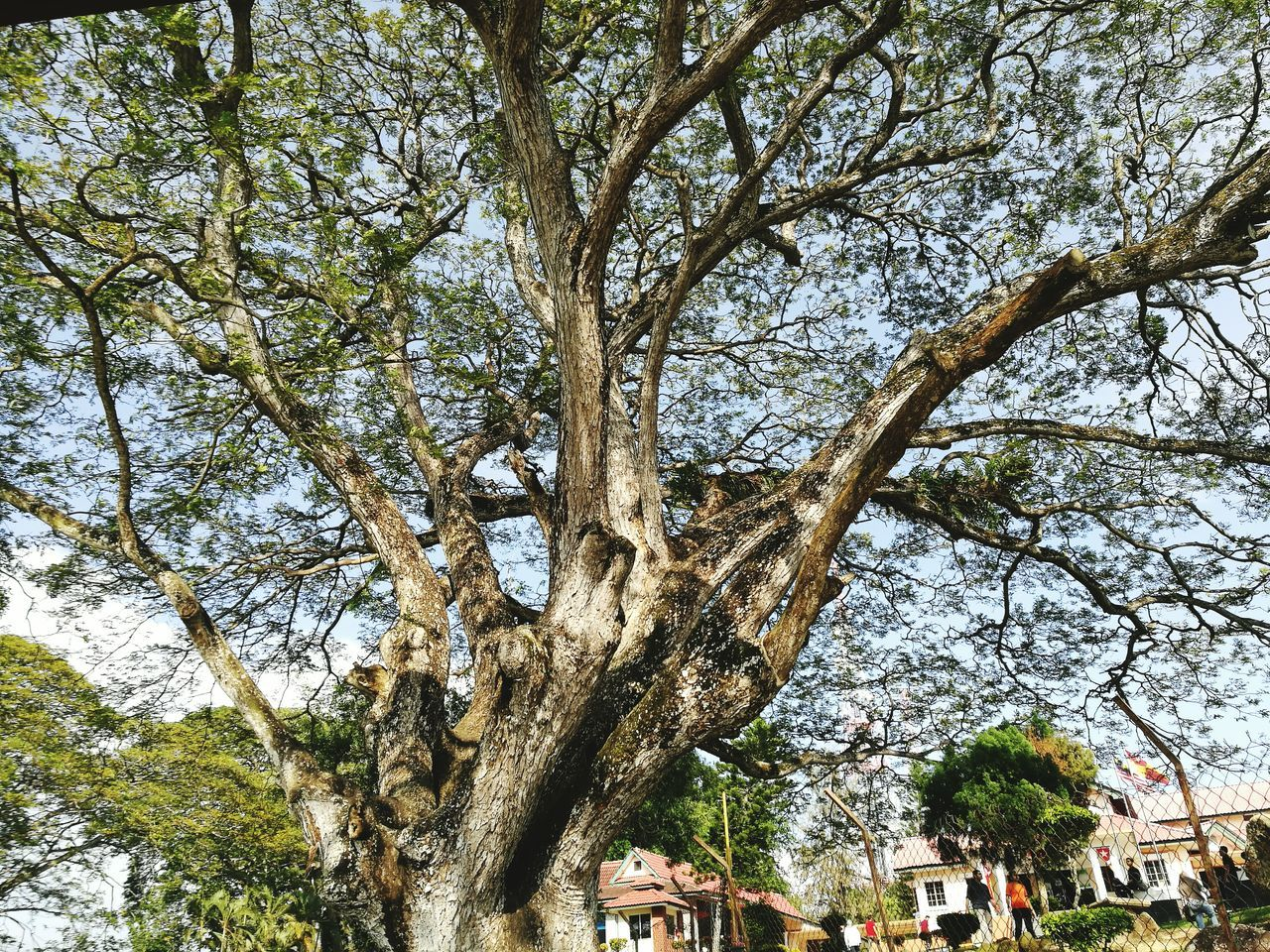 tree, tree trunk, branch, built structure, growth, low angle view, day, nature, building exterior, architecture, outdoors, no people, beauty in nature, sky, city