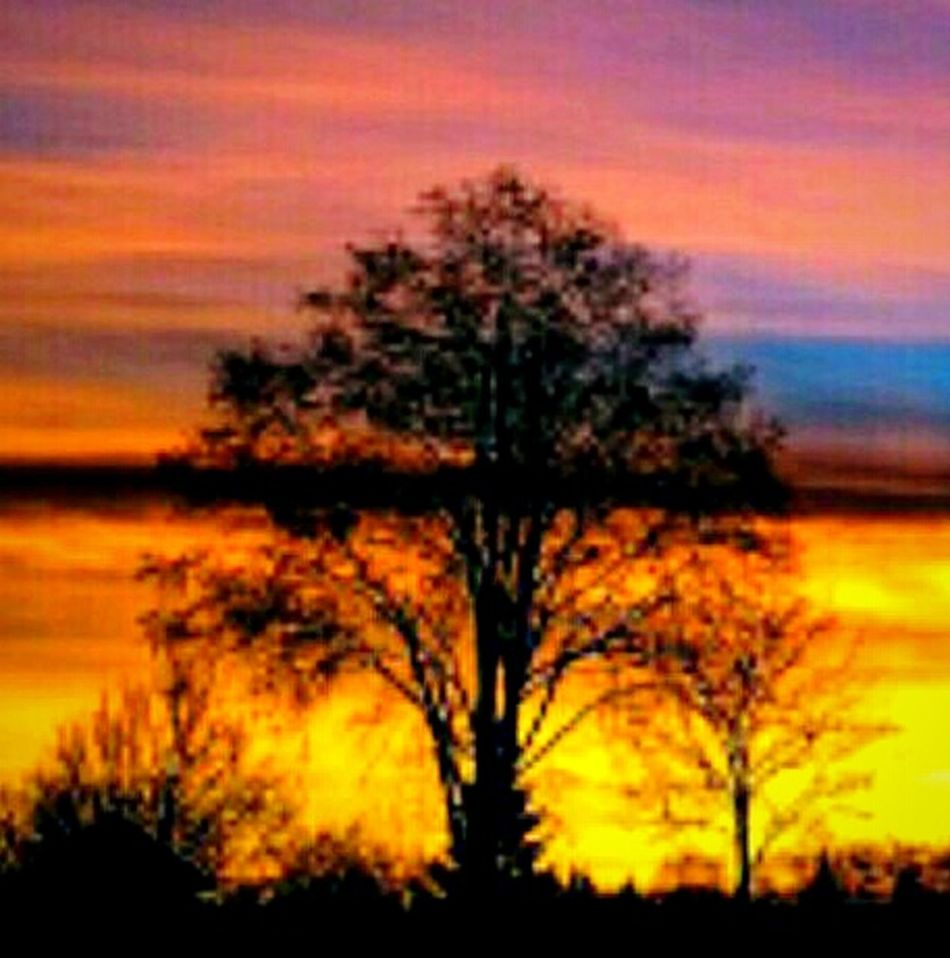 Tree Reedited Tranquility Beauty In Nature Sky Growth Tranquil Scene Outdoors Scenics Branch Single Tree Colorful EyeEm Gallery Cellphone Photography Streamzoofamily Pacific Northwest  Sunrise_Collection Oregon Sunrise EyeEmNewHere Dawn Of A New Day Illuminated Colors In The Sky Goodmorning EyeEm  Day Happiness Is....