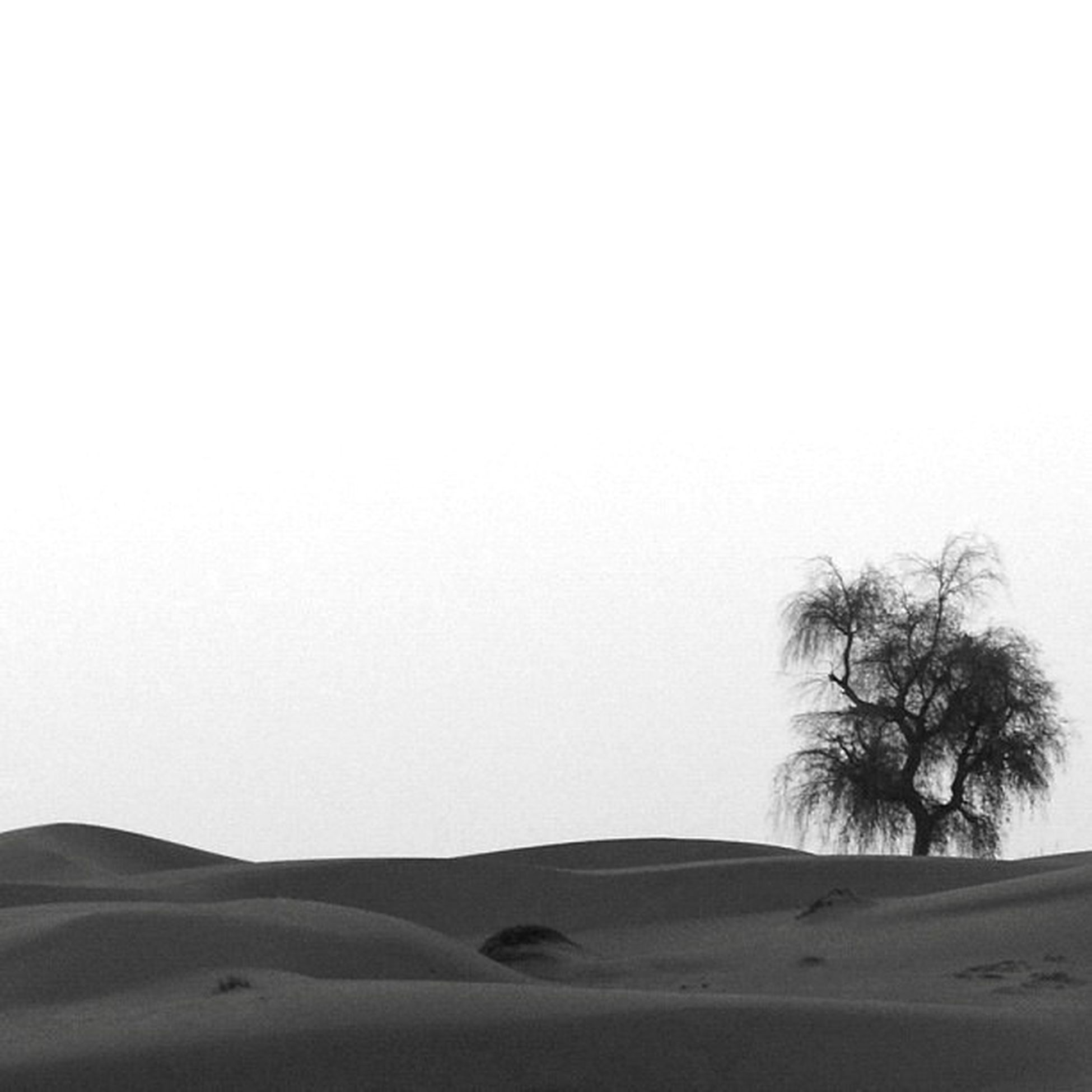 copy space, clear sky, desert, sand dune, studio shot, white background, arid climate, white, sand, single object, paper, moon, high section, dark, arid climate, remote, tranquility, tranquil scene, distant
