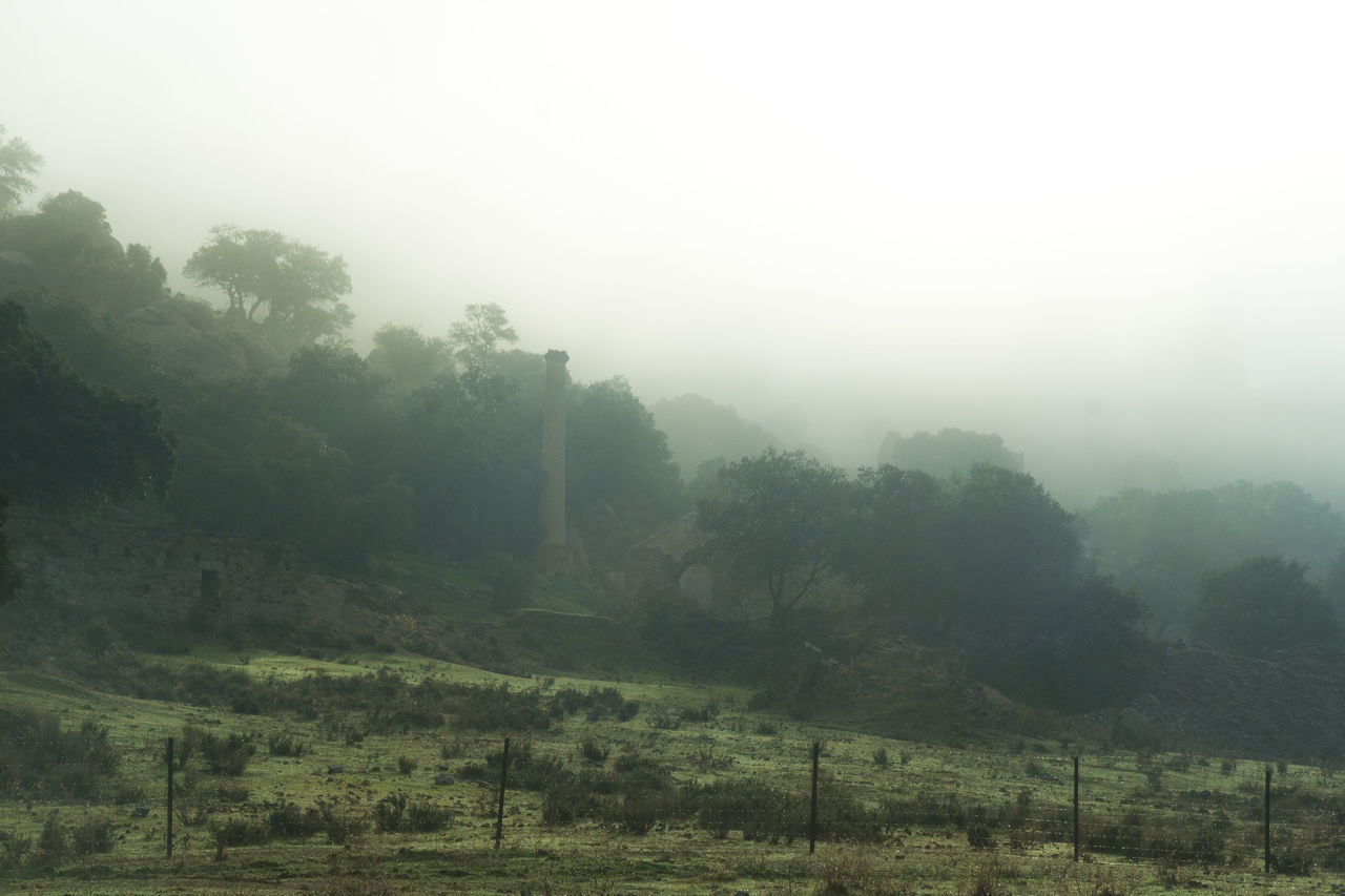 Beauty In Nature Day Fog Hazy  Idyllic Landscape Lush - Description Minas De Linares Minería Minería De Linares Mining Mining Heritage Mist Nature No People Outdoors Scenics Sierra Morena Silence Spooky Tranquil Scene Tranquility Tree Weather