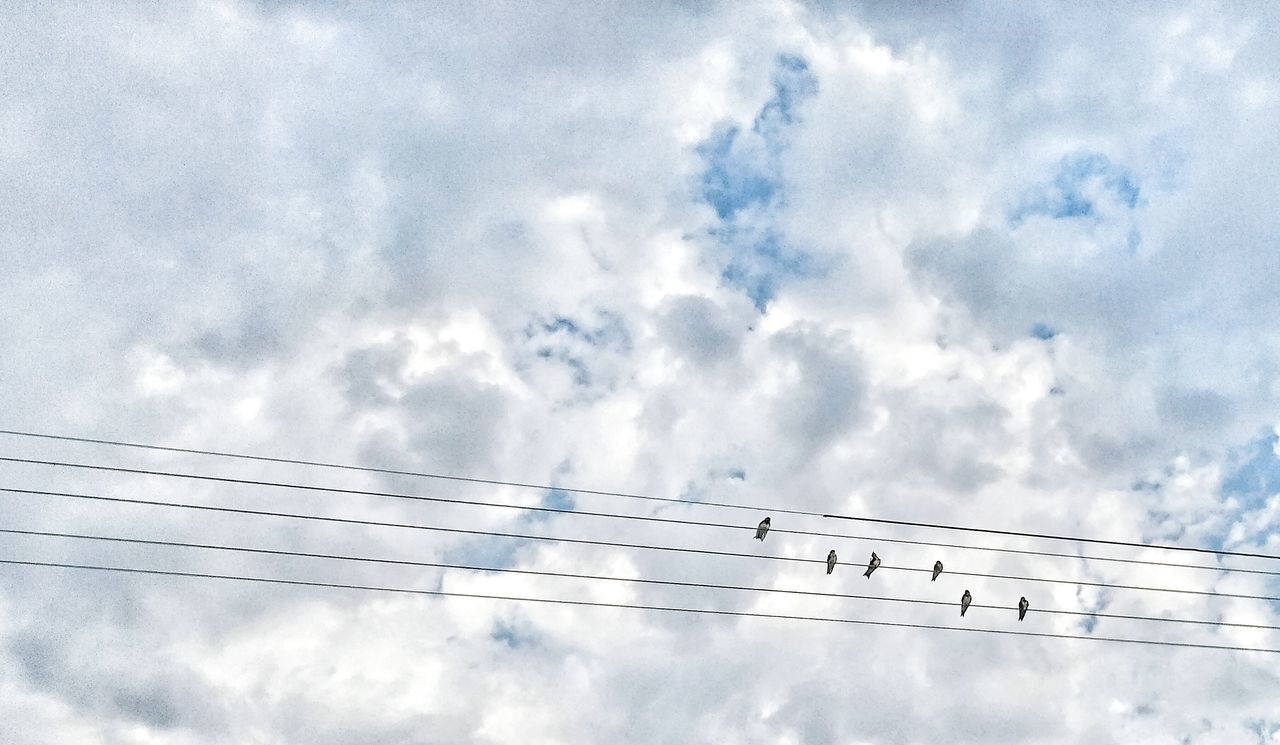 Cloud - Sky Sky Day No People Outdoors Nature Sea Bird Animals In The Wild Technology Animal Themes UnderSea Pixelated