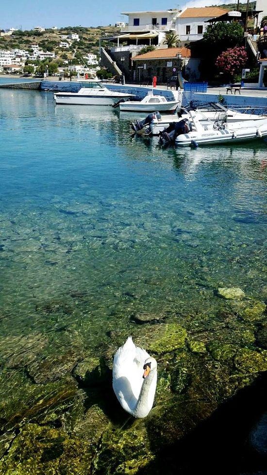Andros Island Andros♡ Swans Sumnerdays Summer 2016 Boats⛵️ Walking Around Island Life Greek Islands Greek_colours Enjoying The Sun