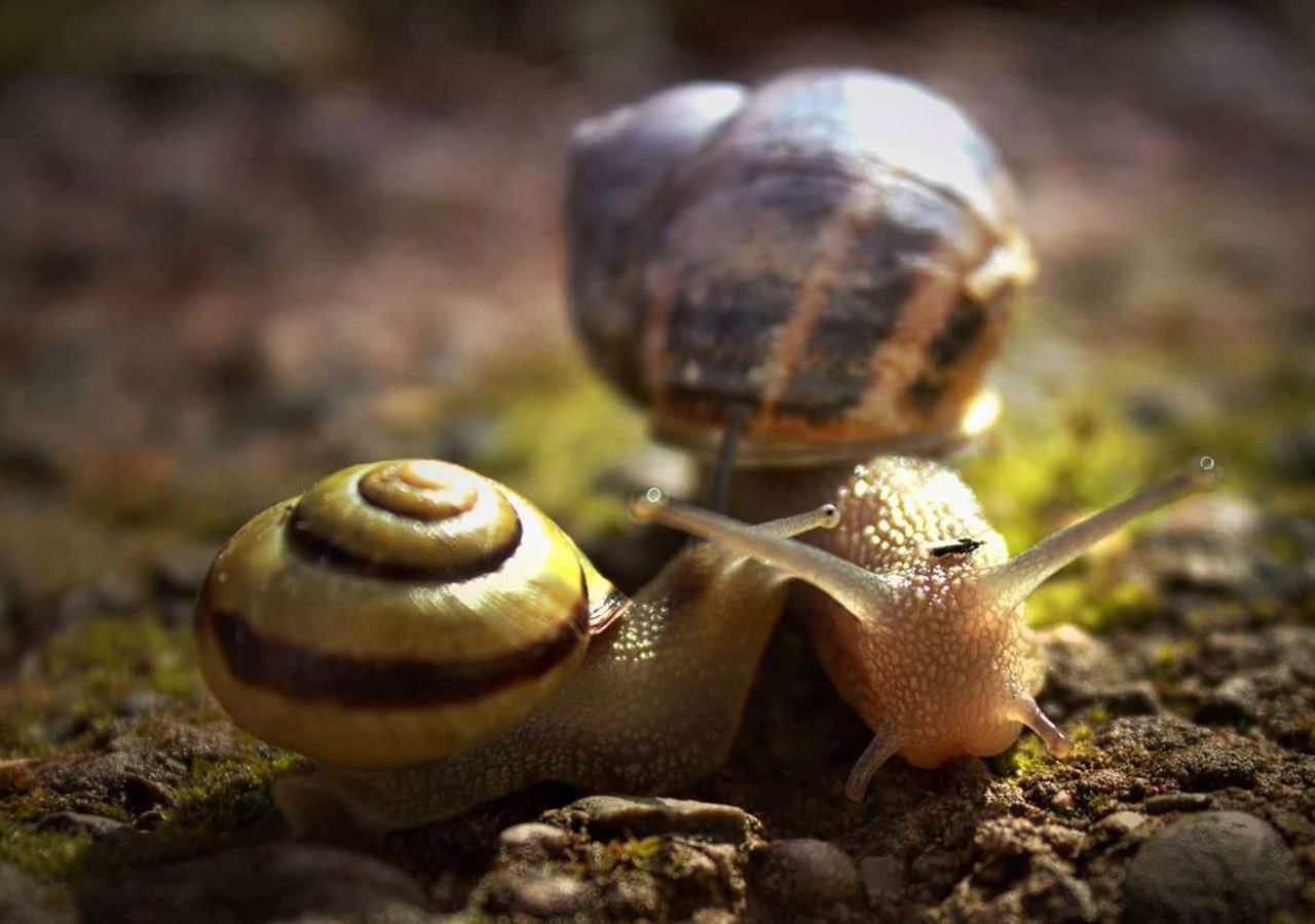 animal themes, snail, close-up, gastropod, nature, animals in the wild, one animal, day, no people, fragility, outdoors, mushroom