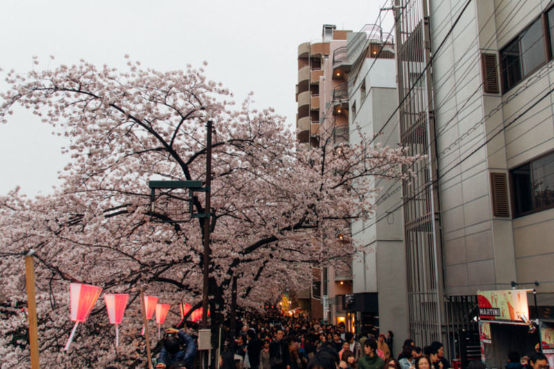 Cherry Blossoms EyeEm Selects EyeEmNewHere Film Happy People Japan Japanese Culture Nature On Your Doorstep Sakura The Journey Is The Destination The Tourist Tokyo Travel Urban Spring Fever VSCO Architecture Building Exterior Built Structure City Clear Sky Crowd Day Enjoyment Flower Nature No People Outdoors People Sky Spring Spring Flowers Springtime Travel Destinations Tree