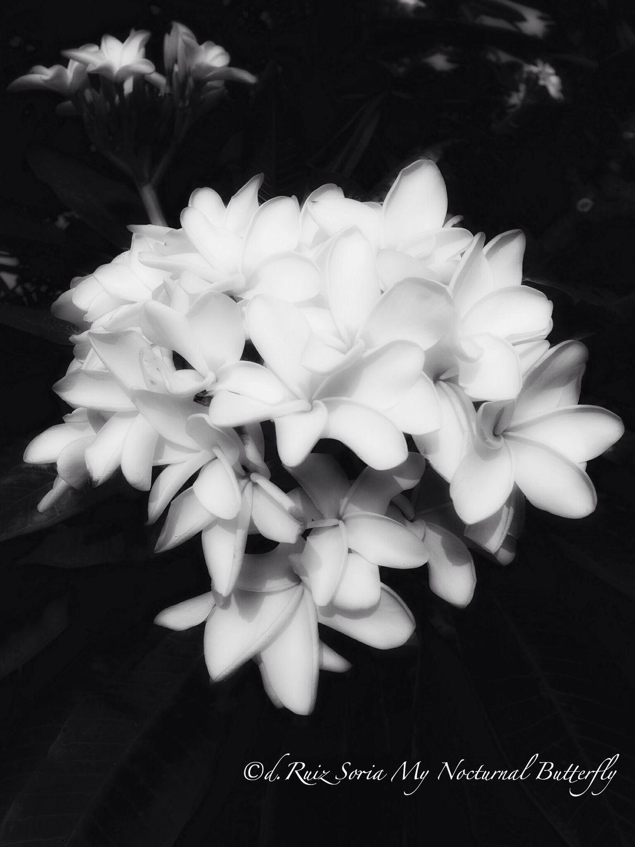EyeEm Best Shots - Flowers EyeEm Best Shots - Black + White Bw_collection Flowerporn