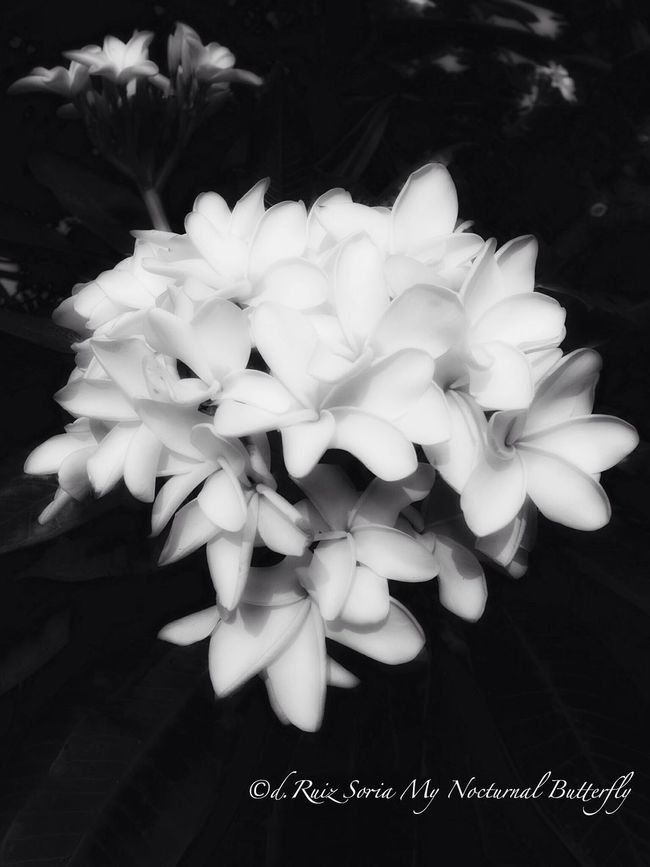 EyeEm Best Shots - Flowers EyeEm Best Shots - Black + White Bw_collection Flowerporn