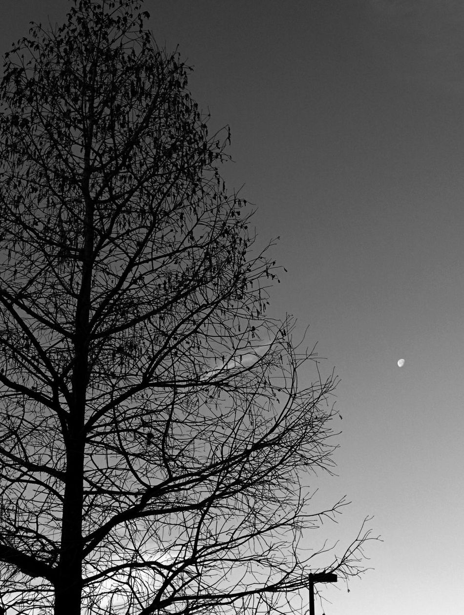 Morning Moon Tree Nature Sky Branch No People Low Angle View Beauty In Nature Day Clear Sky Bare Tree Growth Outdoors Moon Morning Orlando City Downtown Leonidas Bratini