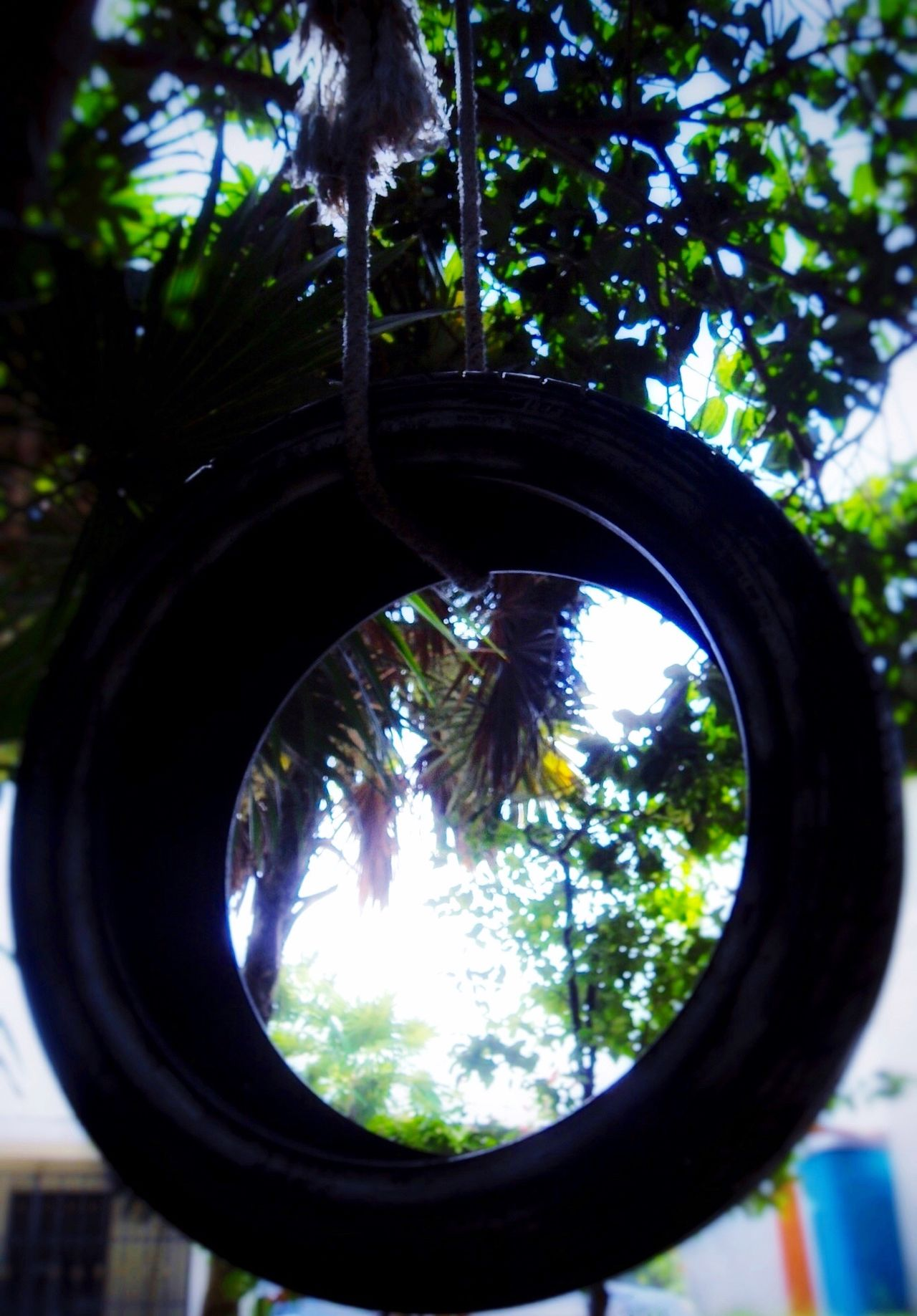 Tyre Tire Swing Columpio Llanta Rope Cuerda Tree Close-up Low Angle View Tree Trunk Nature Branch Recycle Recycling Recycled Materials Reciclaje EyeEm Nature Lover