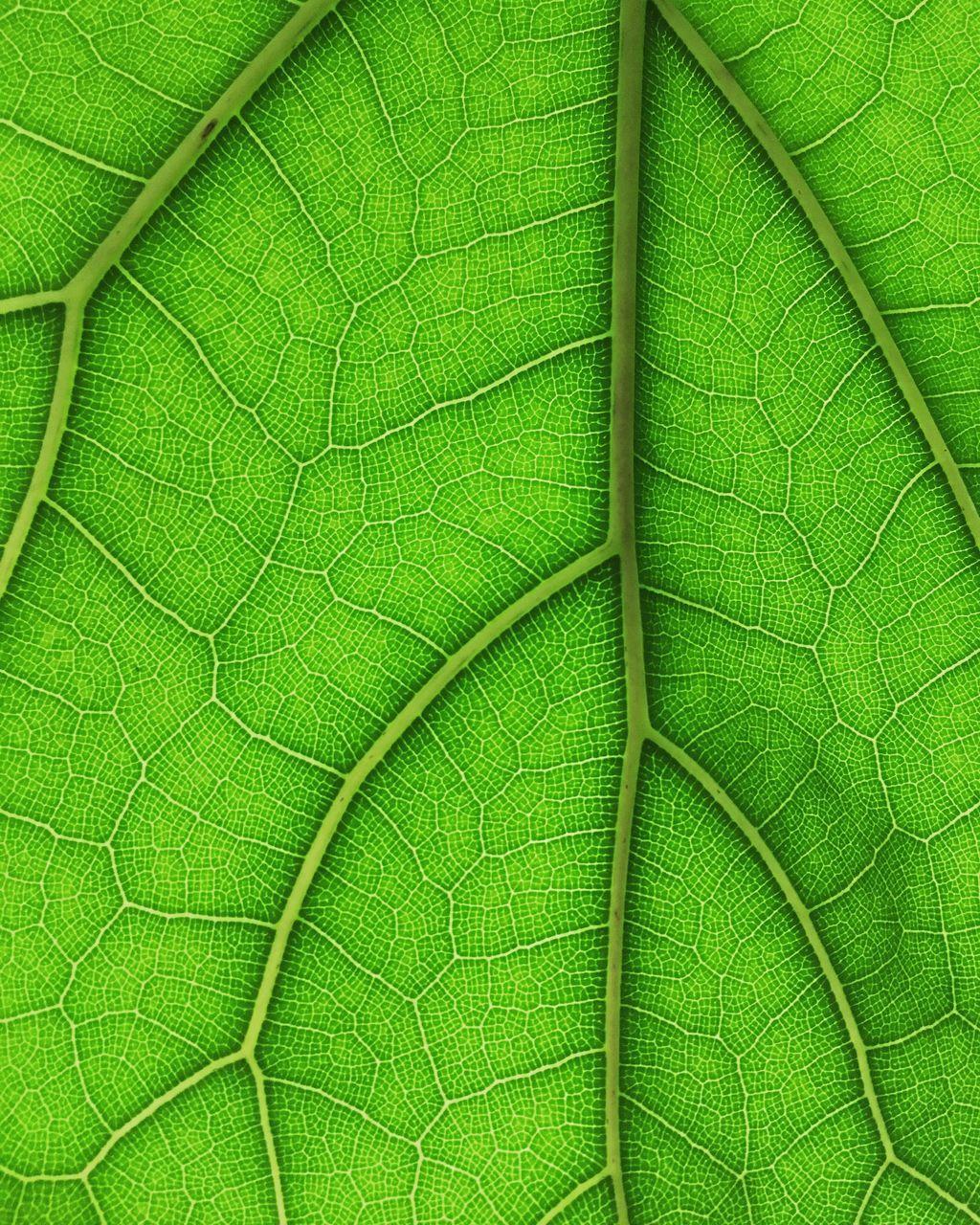 Full Frame Shot Of Leaf