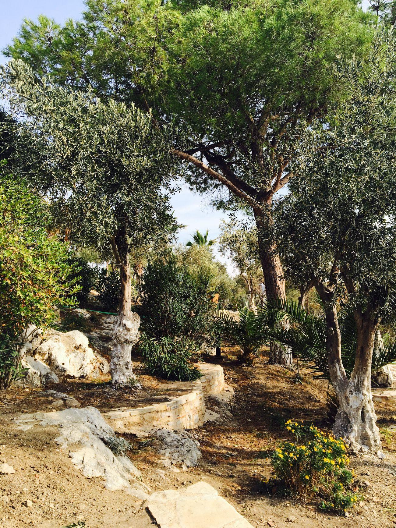 Güvercinada Aydin/Turkey Kuşadası Doğa Green