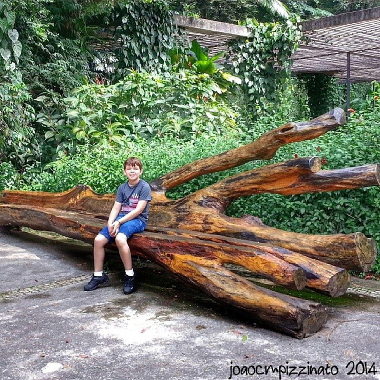 Passeio no Parque. Son Family Tree Plants nature colors city zonasul saopaulo brasil photography burlemarx