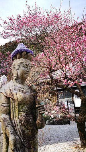 plum tree and Kannon Budda Flower Waist Up Japan Spring2016