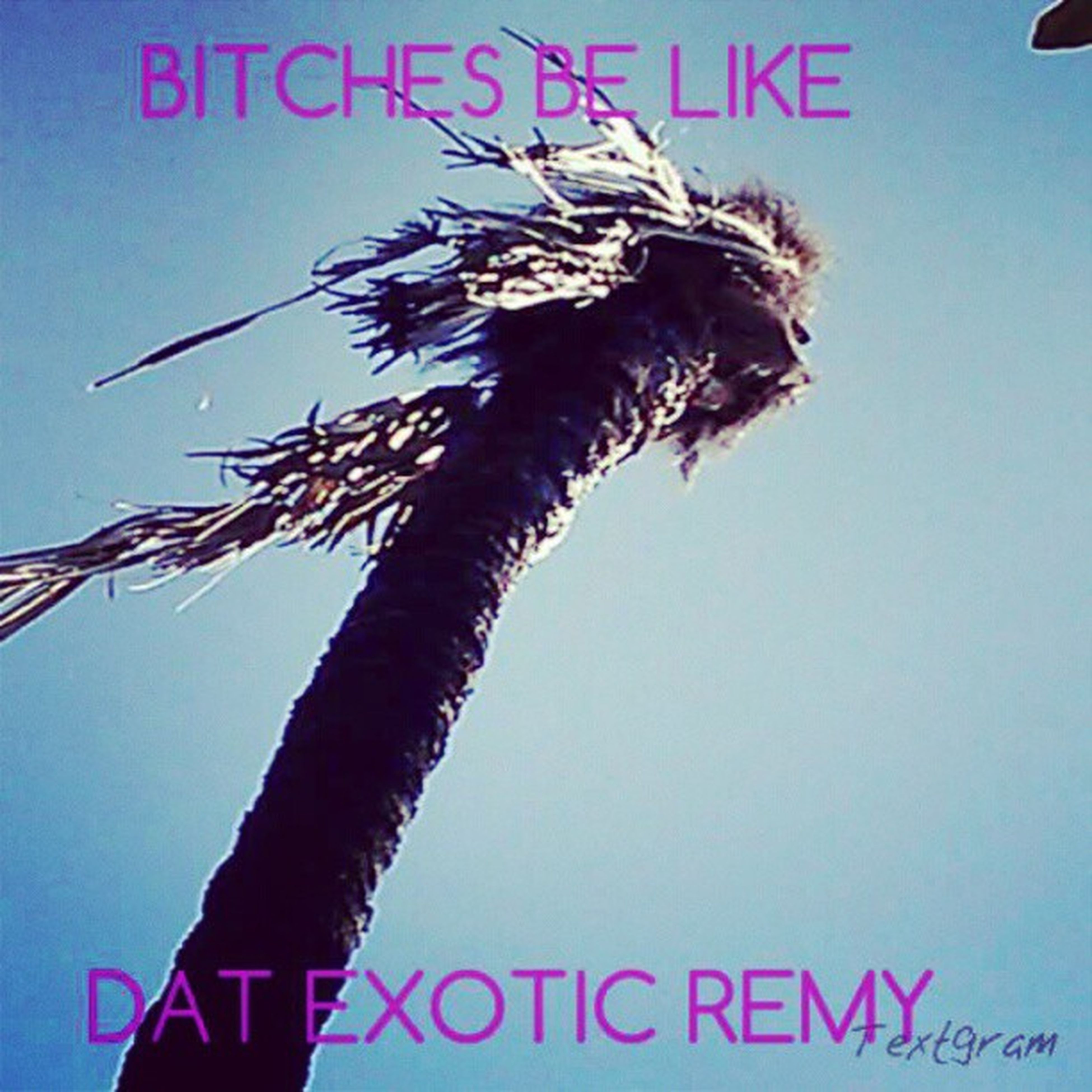Oh that's exotic but it Remy don't look like that Nowaygirl