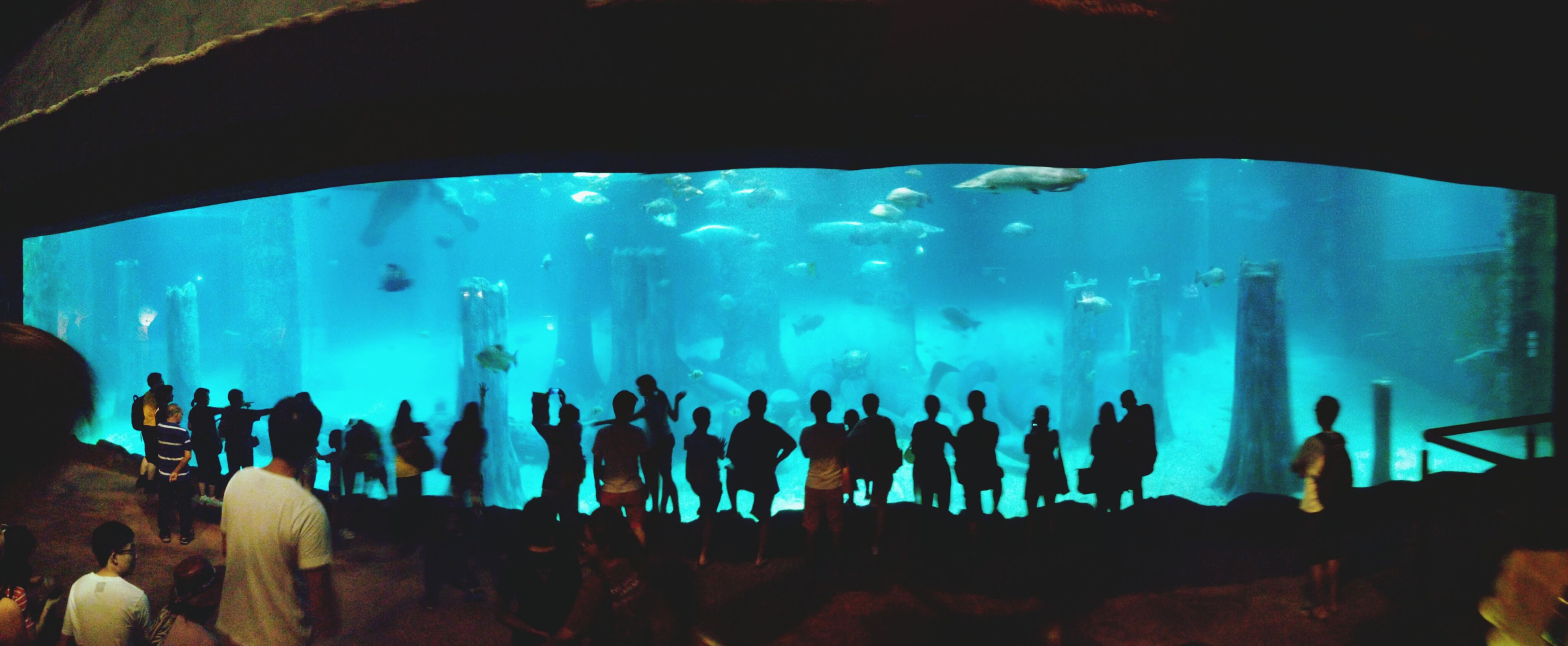 indoors, blue, men, lifestyles, leisure activity, water, large group of people, underwater, person, transparent, unrecognizable person, glass - material, standing, silhouette, aquarium, low angle view, panoramic, nature