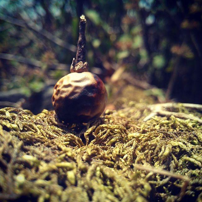 In the nature's lap Ultramacro Seed Naturalhay Htctitan