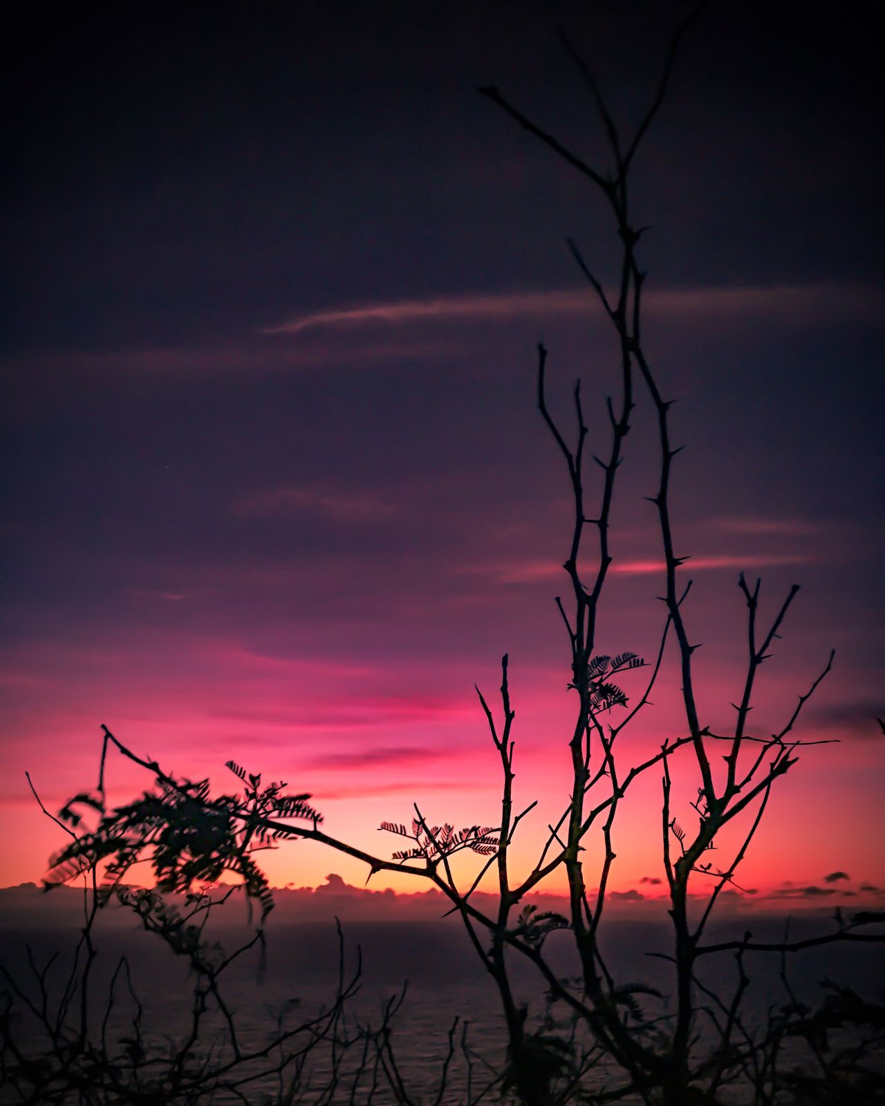 Sunset Nature Tree Beauty In Nature Sky No People Silhouette Tranquility Growth Outdoors Scenics Plant Tranquil Scene Branch Day Tropical Tropical Climate The Week Of Eyeem Eyeemphotography Enjoying Life Sky And Clouds EyeEm Gallery EyeEmBestPics Hello World Silhouette