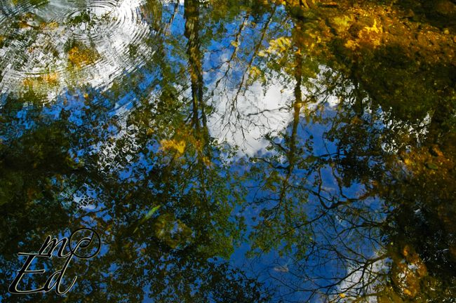 Reflections of color Nature Water Reflection Relaxing Trees Eye4photography  Photography EyeEm Nature Lover Colors Water Reflections