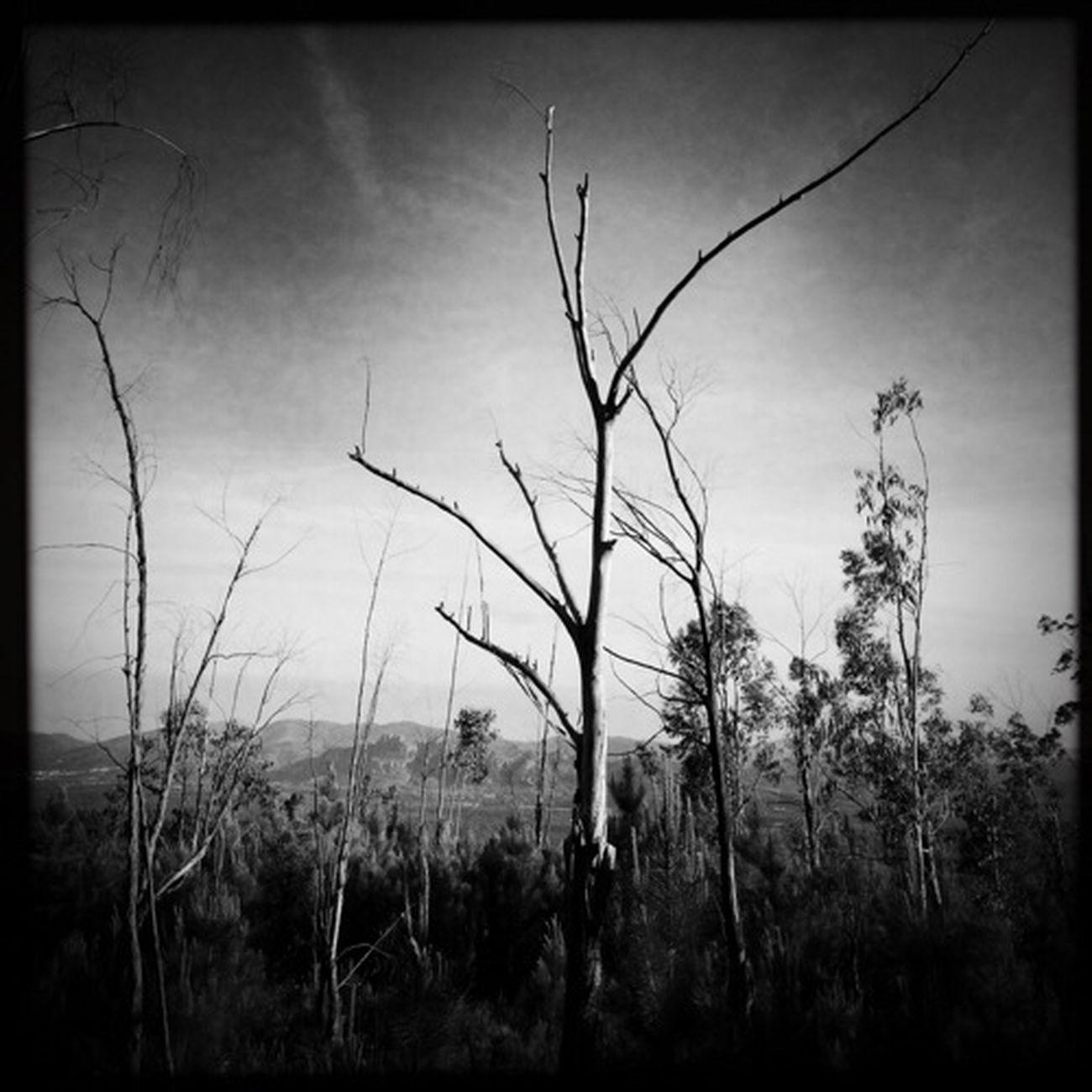 Blackandwhite The Minimals (less Edit Juxt Photography) Nature_collection Landscape