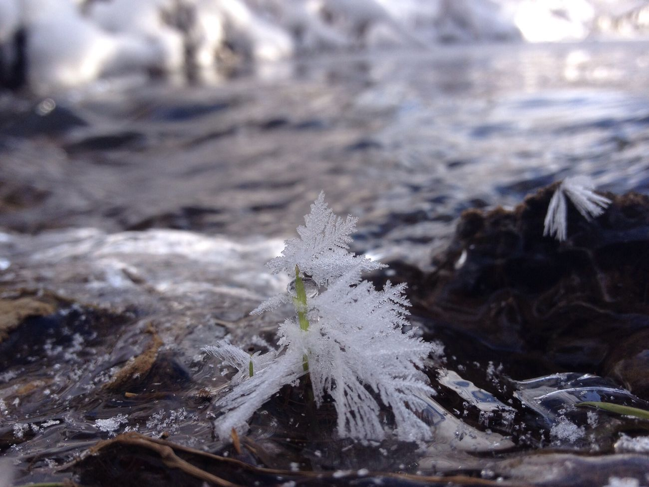Snow flake on the ice covered lake. Popularpage Winterwonderland Shootermag Eye4enchanting