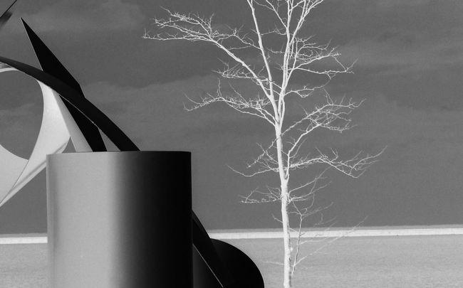 Check This Out EyeEm Best Shots - Black + White Blackandwhite Black & White Trees EyeEm Best Shots EyeEm Gallery EyeEm Best Edits Light And Shadow Darkness And Light Silhouette Malephotographerofthemonth Streetphotography Aiikos Black.n.white EyeEm Nature Lover Taking Photos Hello World Night Lights Monochrome Architecture EyeEm Masterclass Landscape Street Photography First Eyeem Photo Eye4photography